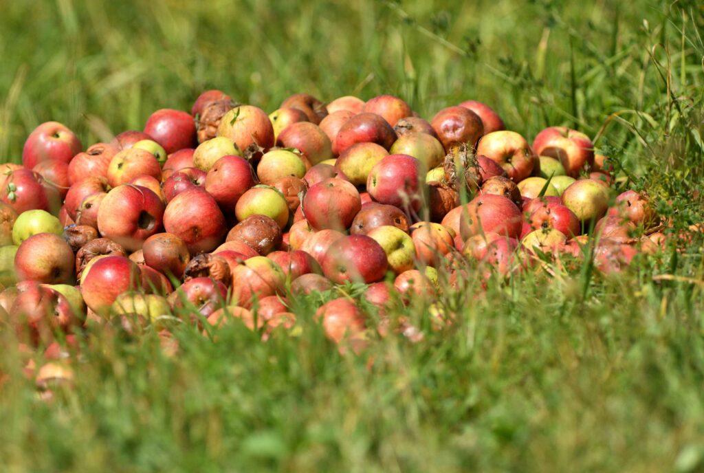 fruits-seches-bio-faits-maison